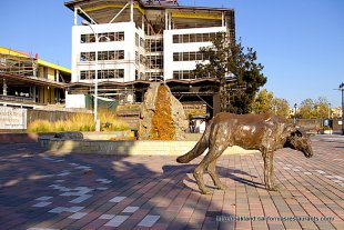 Jack London Square Dog Statue